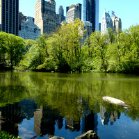 NYC Central Park & Uptown
